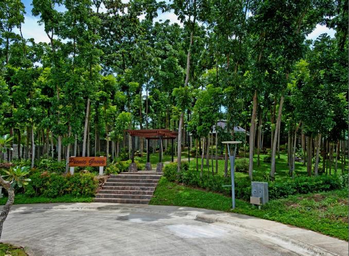 Amara - Picnic Grove