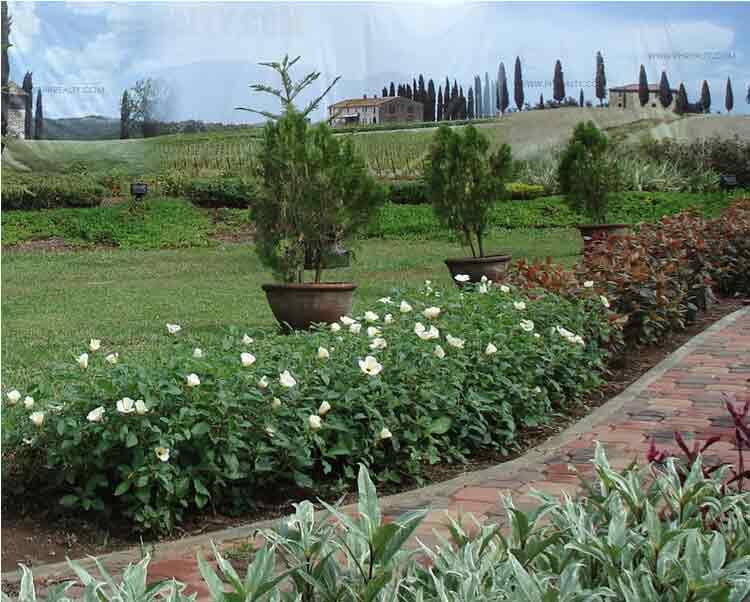 Camella Toscana - Landscape Gardens