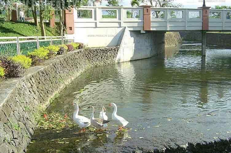 Primrose Place - Day Spring Gardens